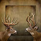 Buck/Deer Background