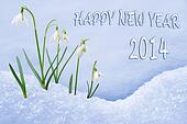 Happy New Year 2014 greeting card, group of snowdrops