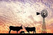Cows silhouette