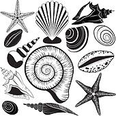 Shells collection. Seashells vector