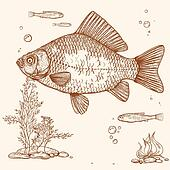 engraving of fish