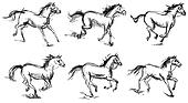 Horse. Set. Hand-drawn. Phase of the movement