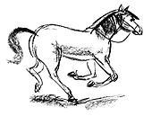 Horse. Hand-drawn