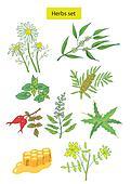 herbs set detailed illustration