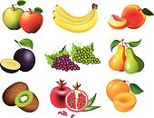 popular fruits vector set