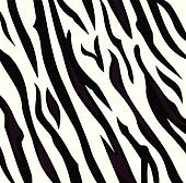 Zebra black and white pattern with stripes