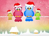 Birds at Christmas