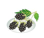 A Plate of Blackberries Isolated On White