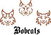 Bobcats and lynxs