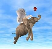 Elephant Flying