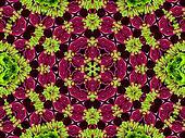 Chrysanthemum natural pattern