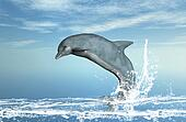 Dolphin Jumps for Joy