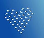 White Swans flying or Geese flying or Crane Flying in the shape of heart against a blue sky background