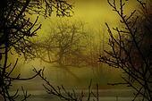 Garden mist