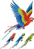 Macaw parrot spread wings and tree sitting Aras