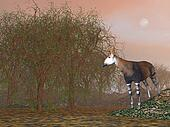 Okapi - 3D render