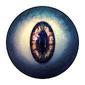 Eyeball of monster