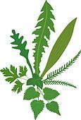 Meadow Herbs