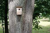 birdhouse hanging on the big tree