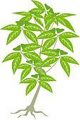 Jungle Plant Leaves