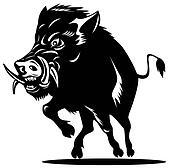 Wild Pig Boar