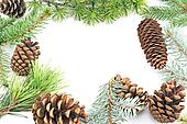 Pine cones and needles on white background