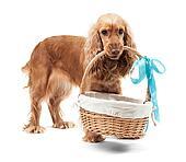 Red dog holding a basket
