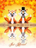 Wedding of red foxes