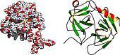 Prostate-specific antigen (PSA, gamma-seminoprotein , kallikrein-3, KLK3) prostate cancer marker protein.