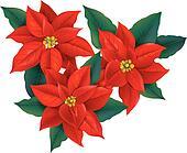 Red Poinsettia christmas flower