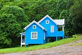 blue house in forest