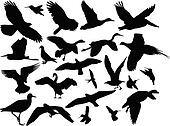 different bird collection - vector