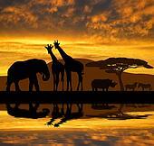 elephant,giraffes,rhino and zebras