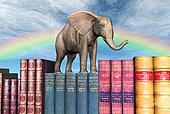 Big Books Little Elephant