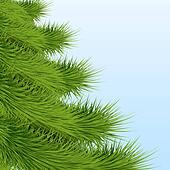 Background Christmas tree spruce