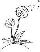 Vector illustration. dandelion. Black outline sketch