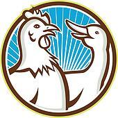 Chicken With Goose Cartoon