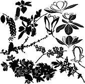 magnolia, cherry, cherry and apple