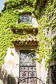 Ivy Over Iron Scrollwork