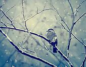Sparrow on the snowy branch