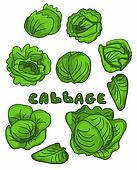 Set cabbage doodle background