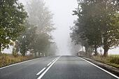 Lazy morning on the empty road