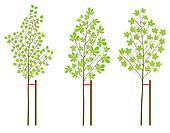 Chestnut, maple and birch tree plants vector background set