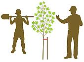 Maple tree plant vector background with worker and gardener