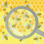 Bees hive and wax honeycomb under magnifier glass inspection illustration background vector