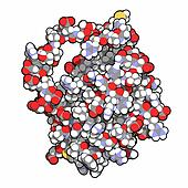 BCL-2 protein. Prevents apoptosis (cell death) and often found o
