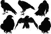 falcon collection - vector