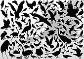 Big and small birds detailed illustration collection background