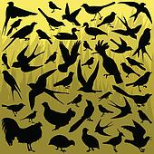 Birds and feathers silhouettes illustration