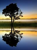 Reflection and silhouette of a tree